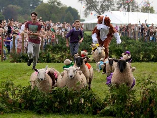 frampton sheep race